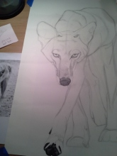 Coyote Process1
