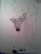 Coyote Process2
