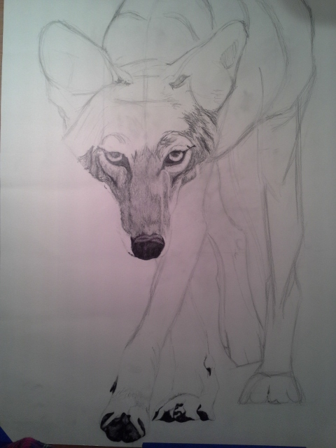 Coyote Process2