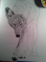 Coyote Process3