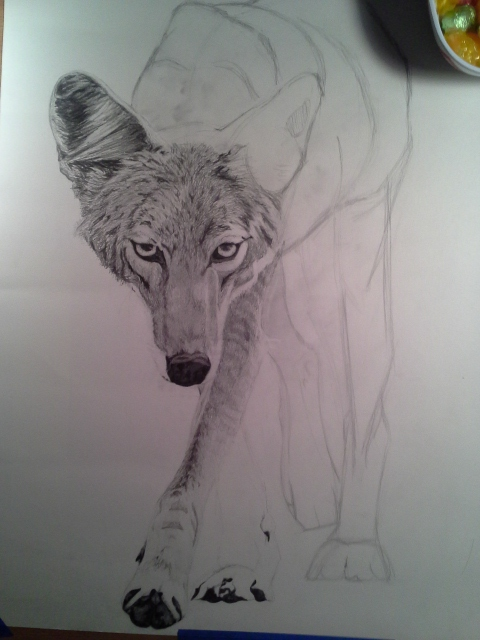 Coyote Process3
