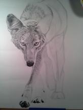 Coyote Process4