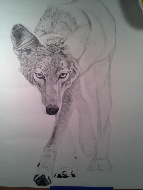 Coyote Process4