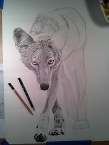 Coyote Process5