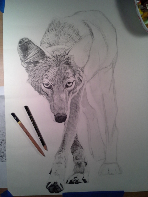 Coyote Process5