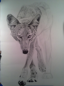 Coyote Process6