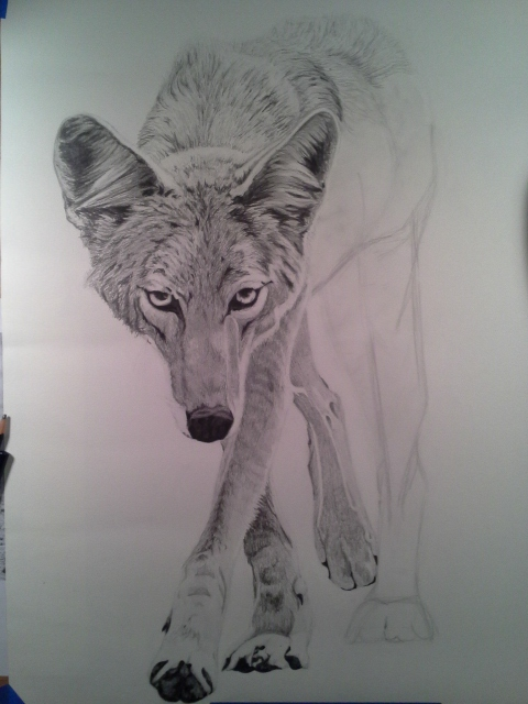 Coyote Process6