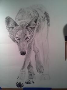 Coyote Process7