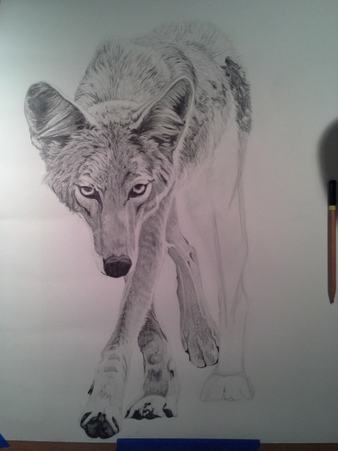 Coyote Process7