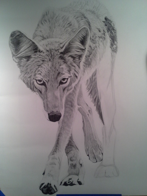 Coyote Process8