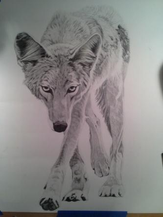 Coyote Process9