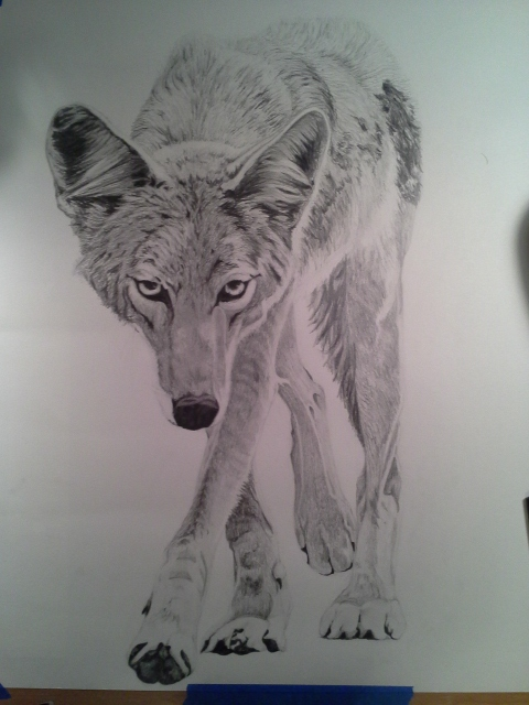 Coyote Process9